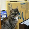 写真: 2013年2月11日のクロちゃん(1歳半)