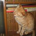 写真: 2007年6月22日のボクチン(3歳)