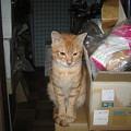 写真: 2005年10月5日のボクチン(1歳)