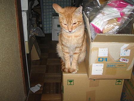 2005年10月5日のボクチン(1歳)