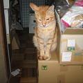 Photos: 2005年10月5日のボクチン(1歳)