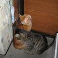 写真: 2005年11月12日のボクチン(1歳)