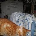 Photos: 2005年12月10日のボクチン(1歳)