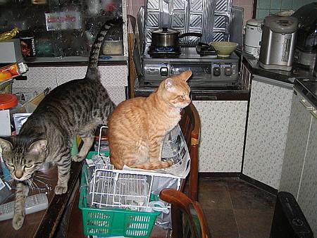 2006年1月19日のボクチン(1歳半)