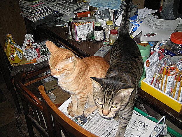 写真: 2006年1月19日のボクチン(1歳半)