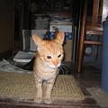 写真: 2006年3月28日のボクチン(1歳半)