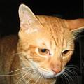 写真: 2006年6月28日のボクチン(2歳)