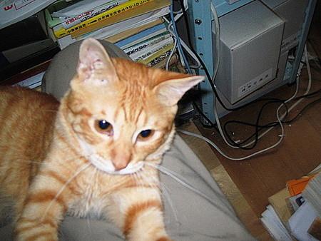 2006年7月13日のボクチン(2歳)