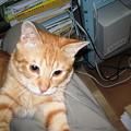 写真: 2006年7月13日のボクチン(2歳)