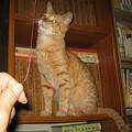 Photos: 2007年6月22日のボクチン(2歳半)