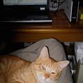 写真: 2007年11月5日のボクチン(2歳半)