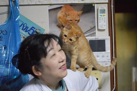 肩に乗るのが大好きなトラちゃん