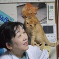 写真: 肩に乗るのが大好きなトラちゃん
