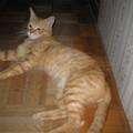 写真: 2008年8月7日のボクチン(4歳)