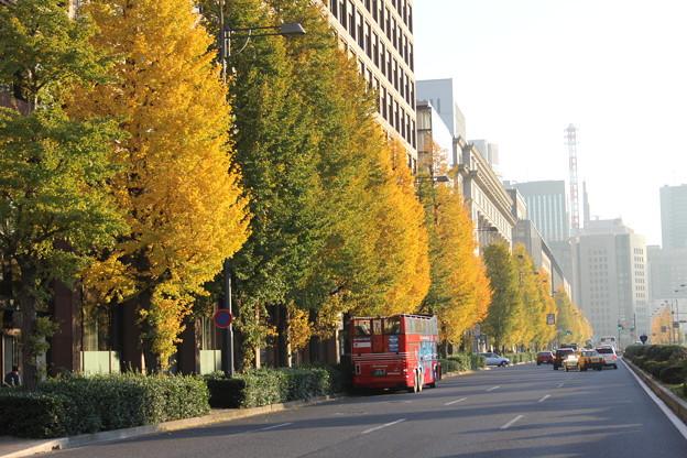 銀杏並木と真っ赤なバス
