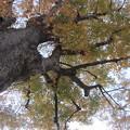 写真: 秋降る木・・・