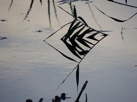 八ッ谷池の自然アート