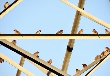雀の夕陽浴び
