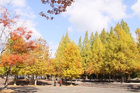 緑化センターの紅葉と黄葉