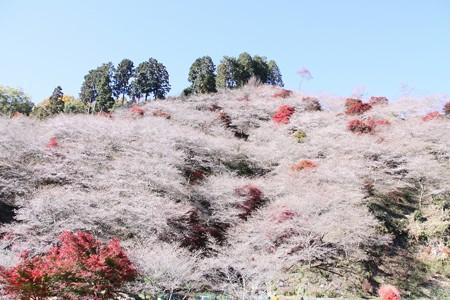 四季桜と紅葉 (1280x853)