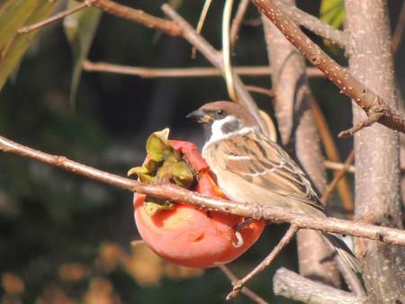 熟し柿は美味いなぁ~~