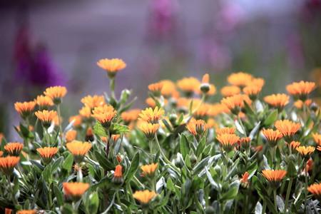 花も春めいて~~