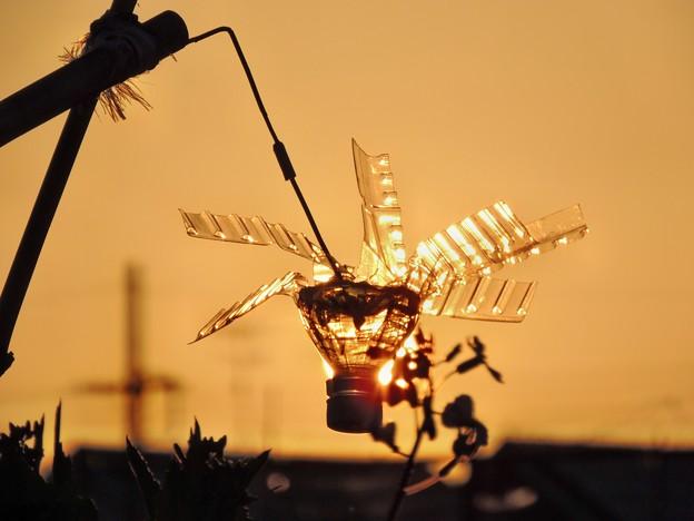 朝日で輝くペットボトルの風車