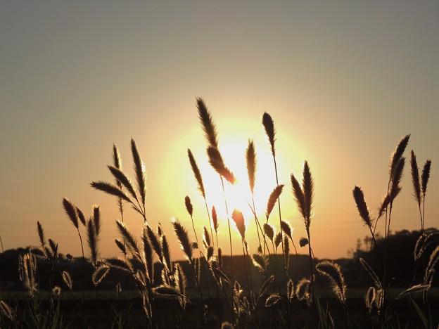 畦道の夕陽