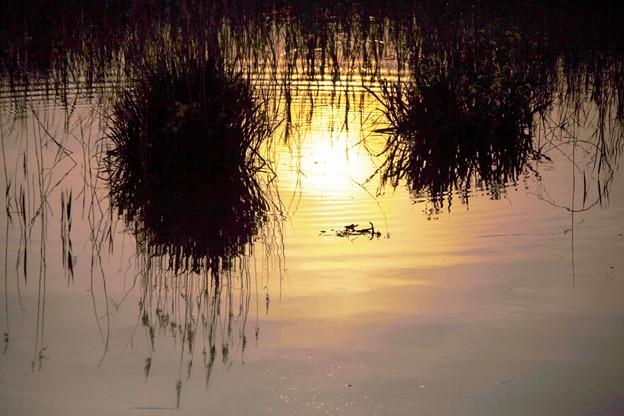 八ッ谷池、夕陽の映り込み