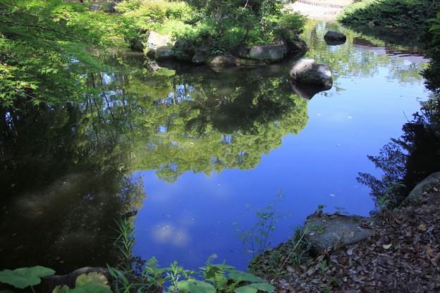 明鏡止水の日本庭園の池