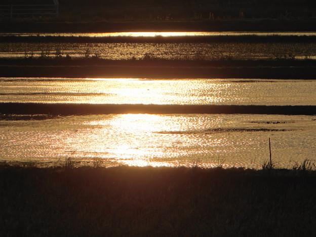 田圃の夕陽