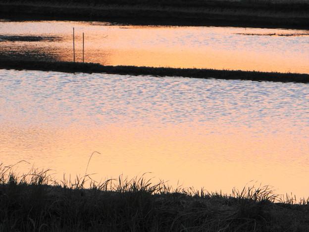 田圃の夕焼け模様