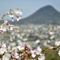 Photos: 讃岐春景