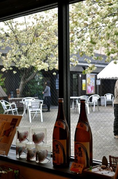 Photos: 黄桜で 乾杯!私は 桜色