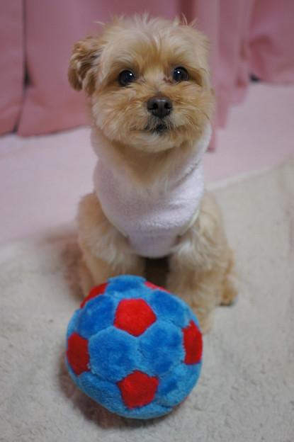 サッカー少犬