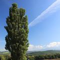 写真: 愛の樹木