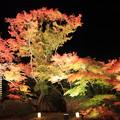 松島・円通院の庭