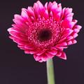 写真: 花は咲く