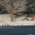 Photos: 雪中散歩