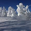 Photos: 造形美の樹氷群