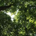 写真: 美人林の中で