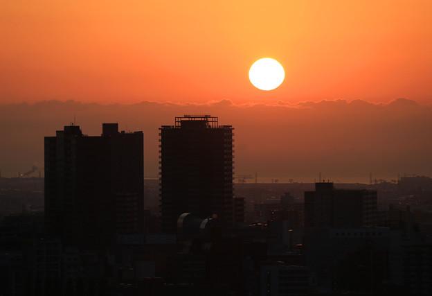 写真: 朝陽を見つめて