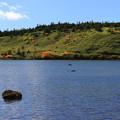 写真: 高原の鎌沼