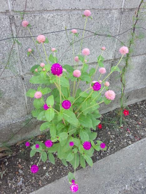 沿道の花。