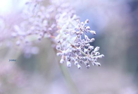 冬支度・・・