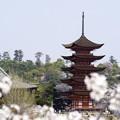 宮島の春 1 (五重の塔)