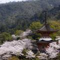 Photos: 宮島の春 2 (多宝塔)