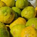 Photos: 軸切り後の柚子