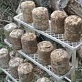 菌床しいたけの菌床