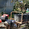 Photos: モノレールでの苗木の運搬